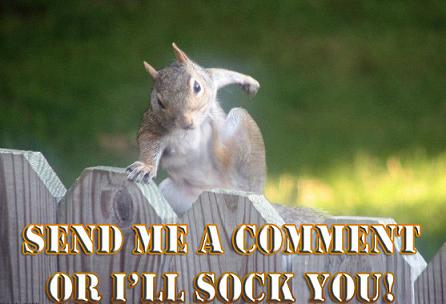 Funny animal comment photo
